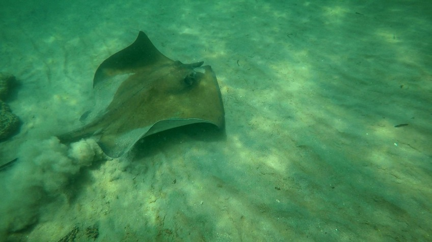 Sting Ray at Dania Jacks
